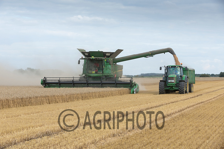 Harvesting Winter Wheat in South Lincolnshire<br /> Picture Tim Scrivener 07850 303986<br /> ….covering agriculture in the UK….