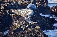 Harbor Seal Lesson
