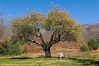 Bench under apple tree<br />