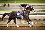 ARCADIA, CA - OCTOBER 29: Tom's Ready, owned by GMB Racing, LLC and trained by Dallas Stewart, exercises in preparation for the Breeders' Cup Las Vegas Dirt Mile at Santa Anita Park on October 29, 2016 in Arcadia, California. (Photo by Alex Evers/Eclipse Sportswire/Getty Images)