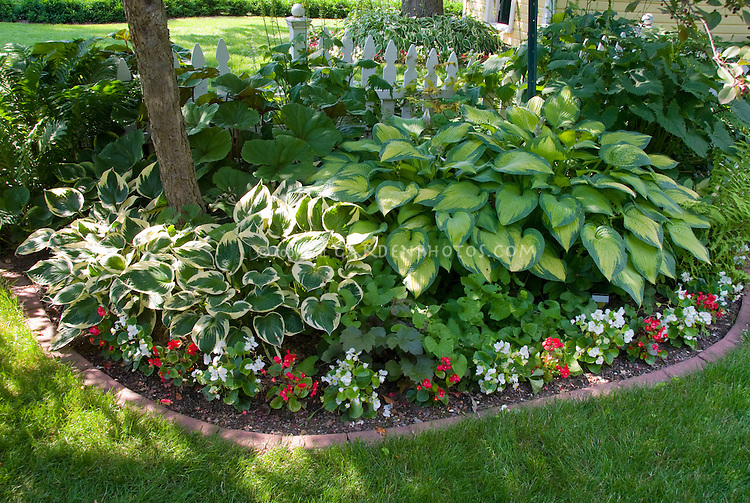 Shade garden with mostly foliage plants hostas, begonias, tree, brick edging, lawn grass, house, ferns, white picket fence, pretty landscaping in backyard with neat trim, part sun, and shade shadows