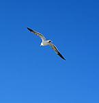 Visiting the Gulls