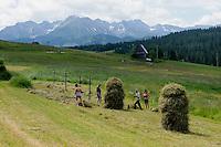 Heuernte in der Hohen Tatra, Woiwodschaft Kleinpolen (Województwo małopolskie), Polen, Europa<br /> Haying in the High Tatra, Poland, Europe