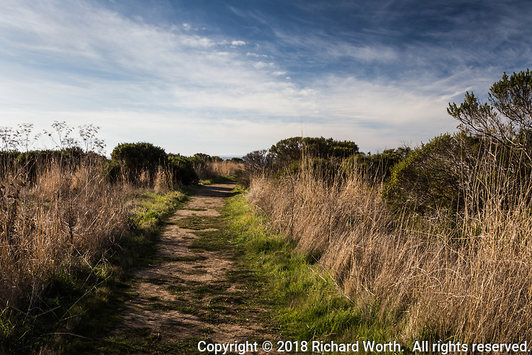 Under a blue and white sky, the dirt path of the South Whitehouse Creek Trail leads to the Pacific Ocean at Año Nuevo State Reserve.