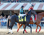 Golden Brown in the post parade as Raging Bull (no. 3) wins the Saranac Stakes (Grade 3), Sep. 1, 2018 at the Saratoga Race Course, Saratoga Springs, NY.  Ridden by Joel Rosario, and trained by Chad Brown, Raging Bull finished 1 1/4 lengths in front of Up the Ante (No. 1).  (Bruce Dudek/Eclipse Sportswire)