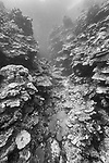 Munda, Western Province, Solomon Islands; large hard coral formations growing on a sloping wall away from the island
