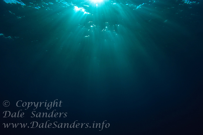 Underwater sun rays dance in the waters of the Galapagos Islands, Ecuador.