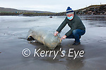 Vincent Hyland inspects a 16 foot Pilot Whale washed up on the beach at The White Strand in Cahersiveen on Friday for Irish Whale & Dolphin Group.