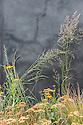 Uprising show garden, designed by Daniel Shea, Hampton Court Flower Show 2012. Plants include Achillea, Heleniums, and grasses.