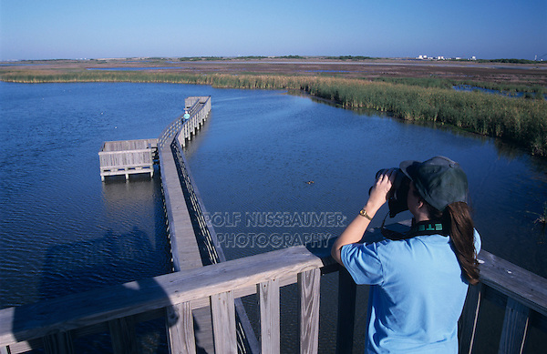 Birder on boardwalk tower, Birding center, Port Aransas, Mustang Island, Texas, USA,