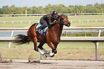 #68Fasig-Tipton Florida Sale,Under Tack Show. Palm Meadows Florida 03-23-2012