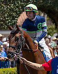 DEL MAR, CA  AUGUST 10:  Storm the Court with Flavien Prat up in the paddock and post parade of a 2 yo maiden race  (Photo by Casey Phillips/Eclipse Sportswire/CSM)