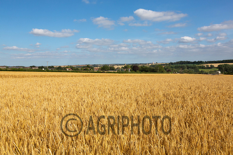 Winter barley in Rutland<br /> ©Tim Scrivener Photographer 07850 303986<br />      ....Covering Agriculture In The UK....