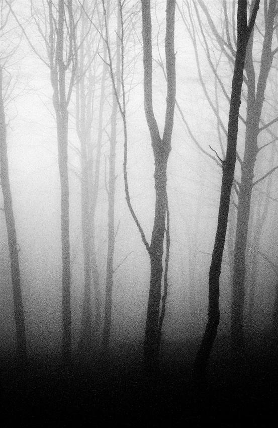 Bakartasun uneak - Solitary moments. Basque Country.<br /> Forest. Photo: Ander Gillenea.