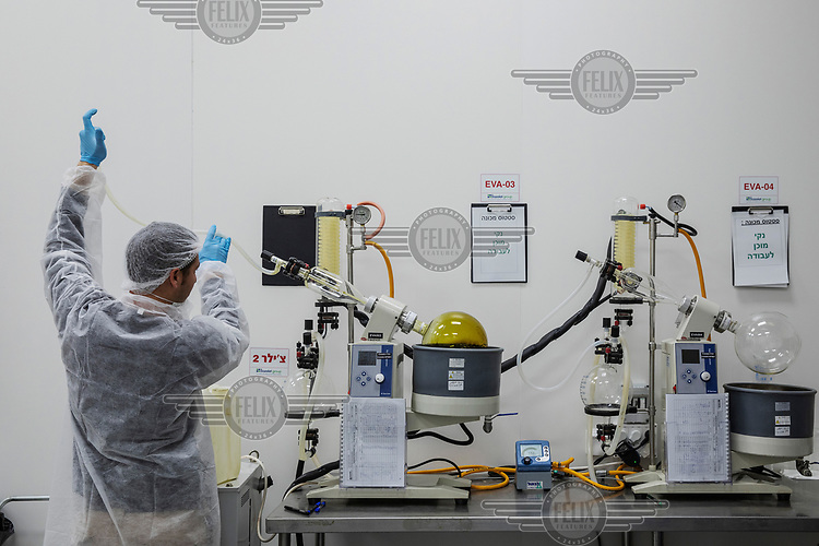 An employee, working in a laboratory extracting cannabis oil for use in medicinal cannabis products made at Bazelet, an Israeli medicinal cannabis company.