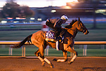 November 5, 2020: Dunbar Road, trained by trainer Chad C. Brown, exercises in preparation for the Breeders' Cup Distaff at Keeneland Racetrack in Lexington, Kentucky on November 5, 2020. Scott Serio/Eclipse Sportswire/Breeders Cup/CSM