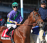 6 March 2010: Custom for Carlos and jockey Julien Leparoux go to the post for The Toboggan at Aqueduct Racetrack in Ozone Park NY.