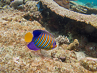 Maldives, Rangali Island. Conrad Hilton Resort. Scuba diving.