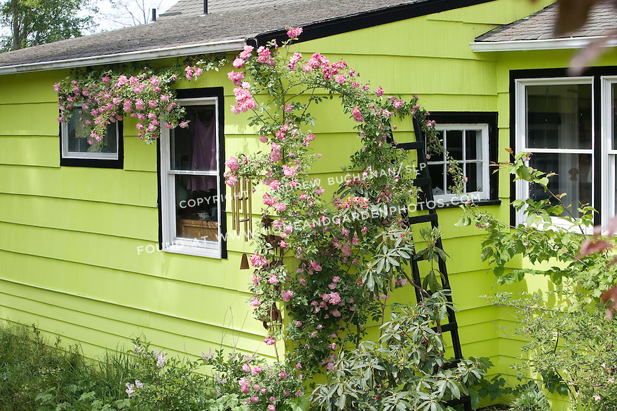 """""""The subject of old roses sparks many thoughts -- of romance, history, and big, overgrown gardens full of cottage flowers.  However, old roses are fine plants for modern gardens and fit into a variety of situations. They offer color, scent, form and -- in or out of bloom -- they are always worth a good story. Old roses have a past, and they aren't afraid to admit it."""".Scramblling up the corner of the house is the rose 'Old Blush', one of the original China roses dating from before 1751.  Known as the """"monthly rose"""", Old Blush starts with a good display in May/June, and continues well in to Fall -- an easy grower for a fence, building, or trellis."""