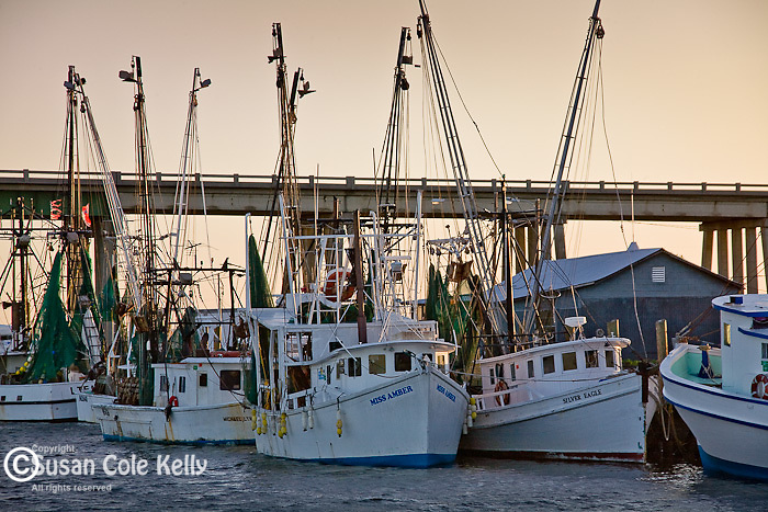 Shrimp boats on Lazaretto Creek, Tybee Island, SC, USA