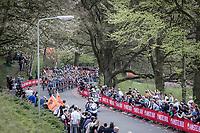Peloton up the Floorberg. <br /> <br /> 53th Amstel Gold Race (1.UWT)<br /> 1 Day Race: Maastricht > Berg en Terblijt (263km)