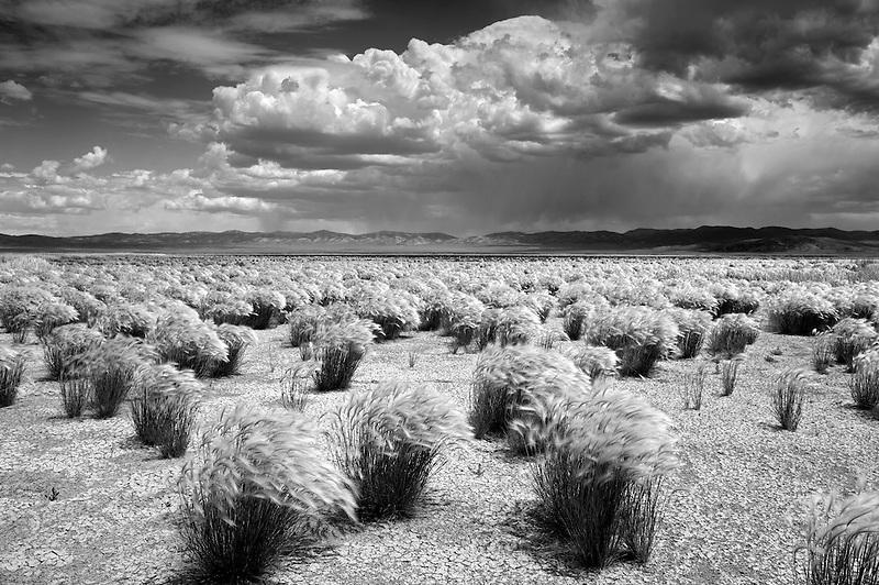 Grasses and thunderstorm. Ruby Lake National Wildlife Refuge, Nevada