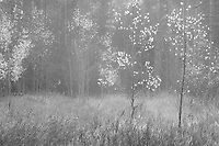 Down the valley near the South Colony Lakes 4WD trailhead, I ran into a thick bank of fog.  This made for some interesting photo opportunities.  The original is in color, but I think I like this black and white version better.