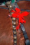 Sleigh bells and a red ribbon adorn a horse at a Christmas Festival in Georgetown, Colorado.