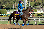 ARCADIA, CA  OCTOBER 30: Breeders' Cup Distaff entrant Paradise Woods, trained by John A. Shirreffs, exercises in preparation for the Breeders' Cup World Championships at Santa Anita Park in Arcadia, California on October 30, 2019.  (Photo by Casey Phillips/Eclipse Sportswire/CSM)