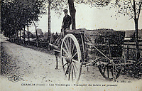 Europe/France/89/Yonne/AOC Chablis : Carte postale ancienne Transport du raisin lors des vendanges