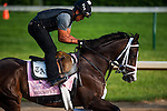 Broadway's Alibi morning workouts for the 138th Kentucky Oaks at Churchill Downs in Louisville, Kentucky on May 3, 2012.