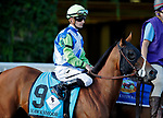 ARLINGTON HEIGHTS, IL - AUGUST 12: Hawksmoor #9, ridden by Julien Leparoux, during the post parade  before the Beverly D. Stakes on Arlington Million Day at Arlington Park on August 12, 2017 in Arlington Heights, Illinois. (Photo by Jon Durr/Eclipse Sportswire/Getty Images)