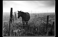 Horse at Sandy Lane, Saltney, near Chester - 1985