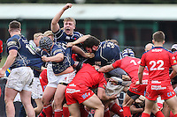 London Scottish v Bristol Rugby 02/04/16