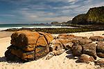 Image Ref: CA968<br /> Location: Bushrangers Bay Track<br /> Date of Shot: 28.09.19