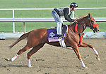 Flashy Ways, trained by Richard Baltas,exercises in preparation for the upcoming Breeders Cup at Santa Anita Park on November 1, 2012.