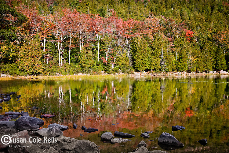 Fall colors Bubble Pond and the shoulder of Cadillac Mountain in Acadia National Park, Downeast, ME, USA