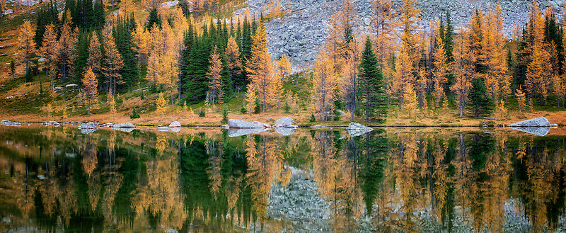 Lake reflection larch in fall color at Moor Lake and mountains. Yoho National Park, Opabin Plateau, British Columbia, Canada