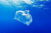 pollution, plastic bag floating under water, Egypt, Red Sea, Indian Ocean