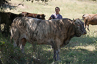 """Europe/France/2A/Corse du Sud/Casalabriva: L'élevage bovin de veaux """"Tigre""""  de Jacques Abbatucci"""