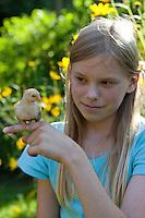 Mädchen, Kind spielt mit jungen Hühnerküken, Küken im Garten, Zwerghuhn, Zwerghühner, glückliche Hühner, freilaufende Hühner, artgerechte Tierhaltung, Landidylle, Idylle