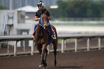 SHA TIN,HONG KONG-APRIL 26: Mongolian Saturday,trained by Ganbat Enebish,exercises in preparation for the Chairman's Sprint Prize at Sha Tin Racecourse on April 26,2016 in Sha Tin,New Territories,Hong Kong (Photo by Kaz Ishida/Eclipse Sportswire/Getty Images)