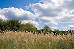 Europa, DEU, Deutschland, Nordrhein Westfalen, NRW, Rheinland, Niederrhein, Ruhrgebiet, Duisburg-Rheinhausen, Gras, Himmel, Wolkenstimmung, Cumuluswolken, Kategorien und Themen, Natur, Umwelt, Landschaft, Jahreszeiten, Stimmungen, Landschaftsfotografie, Landschaften, Landschaftsphoto, Landschaftsphotographie, Wetter, Himmel, Wolken, Wolkenkunde, Wetterbeobachtung, Wetterelemente, Wetterlage, Wetterkunde, Witterung, Witterungsbedingungen, Wettererscheinungen, Meteorologie, Bauernregeln, Wettervorhersage, Wolkenfotografie, Wetterphaenomene, Wolkenklassifikation, Wolkenbilder, Wolkenfoto<br /> <br /> [Fuer die Nutzung gelten die jeweils gueltigen Allgemeinen Liefer-und Geschaeftsbedingungen. Nutzung nur gegen Verwendungsmeldung und Nachweis. Download der AGB unter http://www.image-box.com oder werden auf Anfrage zugesendet. Freigabe ist vorher erforderlich. Jede Nutzung des Fotos ist honorarpflichtig gemaess derzeit gueltiger MFM Liste - Kontakt, Uwe Schmid-Fotografie, Duisburg, Tel. (+49).2065.677997, <br /> archiv@image-box.com, www.image-box.com]