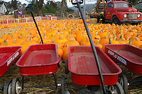 Red Radio Flyer wagons and pumpkins, orange, green and white  - The Pumpkin Depot in Half Moon Bay is ready to fill jack-o'-lantern dreams.  In the background, an old red truck decked out for the season.