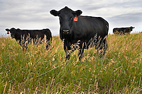 Big Sky Montana Beef