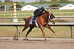 #47.Fasig-Tipton Florida Sale,Under Tack Show. Palm Meadows Florida 03-23-2012 Arron Haggart/Eclipse Sportswire.