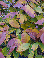 Leaves changing color<br />