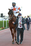 March 27, 2021: COWAN #13 in the post parade for the Al Quoz sprint on Dubai World Cup Day, Meydan Racecourse, Dubai, UAE. Shamela Hanley/Eclipse Sportswire/CSM