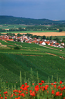 51 Marne/ Cumières: le village et le vignoble champenois de la vallée de la Marne et coquelicots