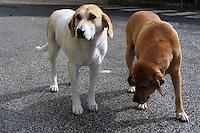 Cani abbandonati dopo il terremoto de L'Aquila  e adottati dalla popolazione.Dogs abandoned after the earthquake in L'Aquila and adopted by the population..